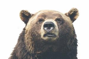 Bear white_bckgrnd
